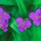 Spiderwort Flowers by rok-e