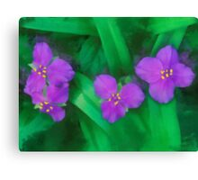 Spiderwort Flowers Canvas Print