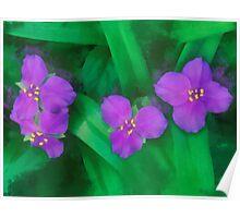Spiderwort Flowers Poster