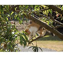 Kitten in a peach tree Photographic Print
