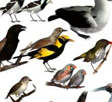 Birds of Australia 2 Sticker