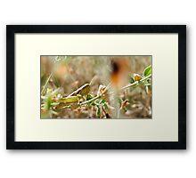 Hopper Hiding In The Grass Framed Print
