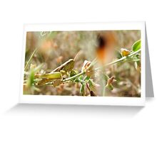 Hopper Hiding In The Grass Greeting Card