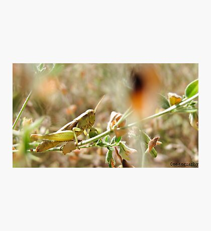 Hopper Hiding In The Grass Photographic Print