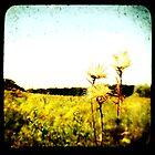 TTV Fields by Karri Klawiter