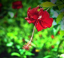 Hibiscus by Pamela Rose Sime
