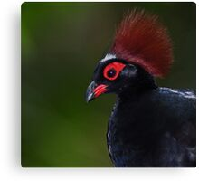 Male Crested Wood Partridge  Canvas Print