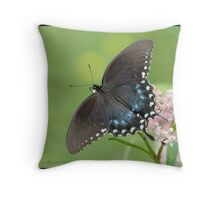 Spicebush Swallowtail butterfly... Throw Pillow