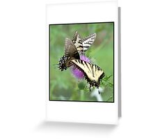 Eastern Tiger Swallowtails on thistle... Greeting Card