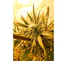 Blue Dream from Above Photographic Print