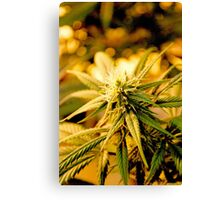Blue Dream Flower Canvas Print