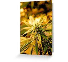 Blue Dream Flower Greeting Card