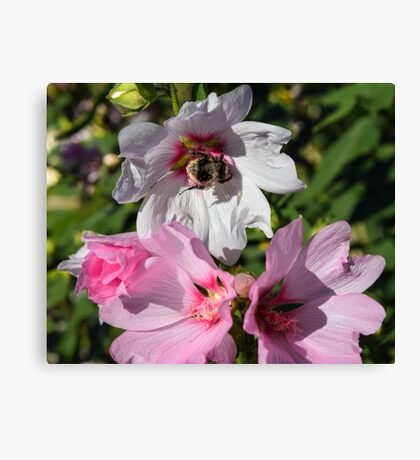 Bee on White Flower Canvas Print