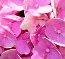 Pink Hydrangeas  Sticker