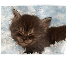 Little Grey Kitten Poster