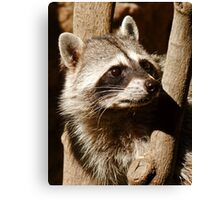 Rocky Raccoon Canvas Print