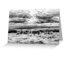 Resting Cows Greeting Card