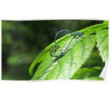 Mayfly spring Poster