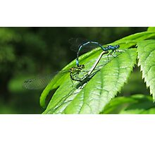 Mayfly spring Photographic Print