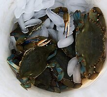 Blue Crabs On Ice by Paulette1021