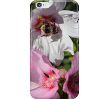 Bee on White Flower iPhone Case/Skin