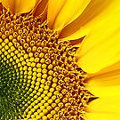 Sunflower #2 by Jennifer Hulbert-Hortman