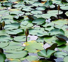 Water Garden by BarkingGecko