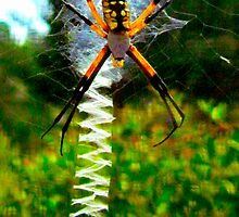 Spiders Ladder by Jonathan  Green