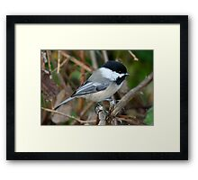 Chickadee in Autumn: Double Grip Framed Print