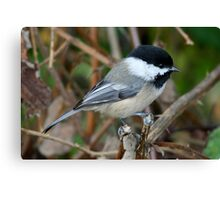 Chickadee in Autumn: Double Grip Canvas Print