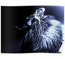Black & Blue. Werewolf Poster