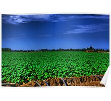 Cotton Field Being Irrigated Poster