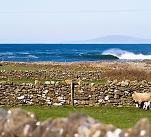 Stone walls and the barrels are clean by Paudie Scanlon