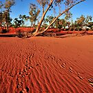 Dingo in Dingo out by Bryan Cossart