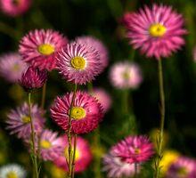 Spring Gift... by GerryMac