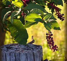 Berries by the Fence Post by vigor