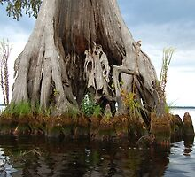 Remarkable Cypress - Lake Drummond by Michele Conner