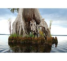 Remarkable Cypress - Lake Drummond Photographic Print