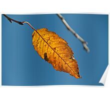 The only leaf Poster