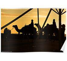Camels @ Glenelg Poster