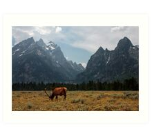 Elk in the Grand Tetons Art Print