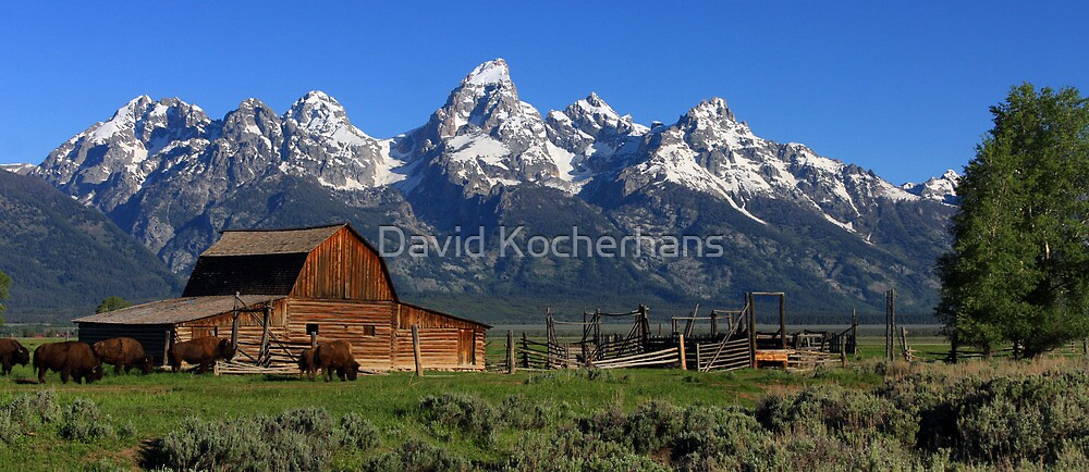 Bison At The Barn Panorama by David Kocherhans