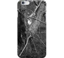Spider tree iPhone Case/Skin