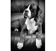 Missing you - Boxer Series Photographic Print
