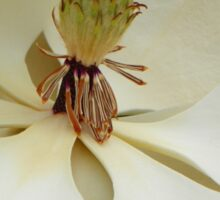Magnolia Up Close Sticker