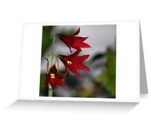 Dark Red Greeting Card