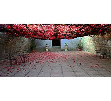 Vine covered courtyard Photographic Print