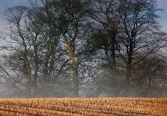 Autumn by Trevor Kersley