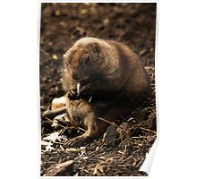 Its Been a Long Day - Prairie Dog Poster
