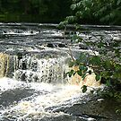 Aysgarth Falls - Yorks Dales. by Trevor Kersley